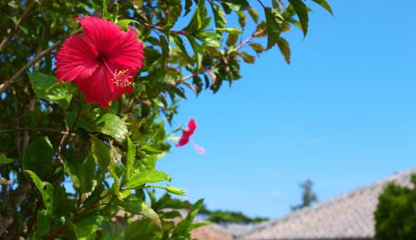 沖縄県の風景画像